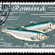 Postage stamp Romania 1960 Pontic Shad, Alosa Immaculata — Stock Photo