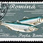 Postage stamp Romania 1960 Pontic Shad, Alosa Immaculata — Stock Photo
