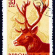 Postage stamp Romani1961 Red Deer, Cervus Elaphus, Animal — Stock Photo #18142835