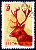 Postage stamp Romania 1961 Red Deer, Cervus Elaphus, Animal — Stock Photo