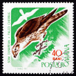 Postage stamp Romania 1967 Saker Falcon, Bird of Prey — Foto Stock
