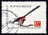 Postage stamp Romania 1959 Long-tailed Tit, Bird — Stock Photo