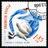 Postage stamp Romania 1965 Mute Swan, Bird — Stock Photo