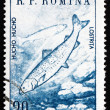Postage stamp Romania 1960 Huchen, Danube Salmon — Stock Photo