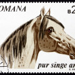 Stock Photo: Postage stamp Romania 1970 Arabian Thoroughbred, Horse