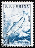 Postage stamp Romania 1960 Huchen, Danube Salmon — Stock Photo