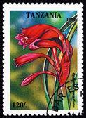 Postage stamp Tanzania 1994 Cyrtanthus Minimiflorus, Plant — ストック写真