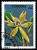 Postage stamp Tanzania 1994 Stake-like Anacheilium, Encyclia Pen — Stock Photo