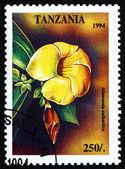 Postage stamp Tanzania 1994 Golden Trumpet, Allamanda Cathartica — Stock Photo