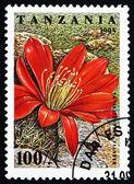 Postage stamp Tanzania 1995 Rebutia Spegazziniana, Cactus Flower — ストック写真