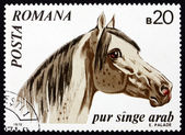Postage stamp Romania 1970 Arabian Thoroughbred, Horse — Stock Photo
