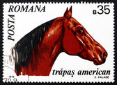 Postage stamp Romania 1970 American Trotter, Horse — Stock Photo