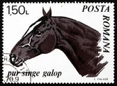 Postage stamp Romania 1970 Trotter Thoroughbred, Horse — Stock Photo