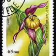 Postage stamp Malagasy 1993 Cypripedium Calceolus, Orchid — Stock Photo