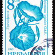 Postage stamp Bulgaria 1986 Morning Glory, Ipomoea Tricolor, Flo — Stock Photo
