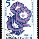 Postage stamp Bulgaria 1985 Morning Glory, Convolvulus Tricolor, — Stock Photo #18317389