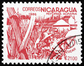 Postage stamp Nicaragua 1986 Sugar Cane, Agrarian Reform — Stock Photo