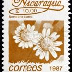 Postage stamp Nicaragua 1987 Senecio Spec, Flower — Stock Photo #18652451
