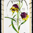 Postage stamp Greece 1978 Dwarf Lily, Flower — Stock Photo