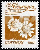 Postage stamp Nicaragua 1987 Senecio Spec, Flower — Stock Photo