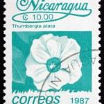 Postage stamp Nicaragua 1987 Black-eyed Susan Vine, Flower — Stock Photo #18692353