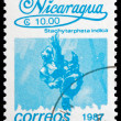 Postage stamp Nicaragua 1987 Indian Snakeweed, Flower — Stock Photo