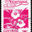 Postage stamp Nicaragua 1987 Tecoma Stans, Vine, Flower - Stok fotoraf