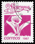 Postage stamp Nicaragua 1987 Mayflower Orchid, Flower — Stock Photo