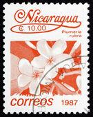 Postage stamp Nicaragua 1987 Plumeria Rubra, Tree, Flower — Stock Photo
