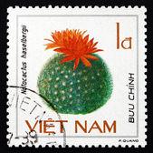 Postage stamp Vietnam 1985 Notocactus Haselbergii, Cactus — Stock Photo