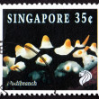 Stock Photo: Postage stamp Singapore 1994 Nudibranch, Marine Mollusk
