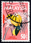Postage stamp Malaysia 1965 Blacknaped Oriole, Bird — Stock Photo