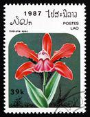 Postage stamp Laos 1987 Sobralia Spec, Orchid, Flower — Stock Photo
