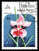 Postage stamp Laos 1987 Vanda Teres, Orchid, Flower — Stock Photo