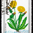 Stock Photo: Postage stamp Mongoli1991 Dandelion, Taraxacum Officinale
