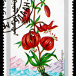 Postage stamp Mongolia 1991 Martagon, Flowering Plant — Stock Photo