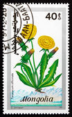 Postage stamp Mongolia 1991 Dandelion, Taraxacum Officinale — Stock Photo