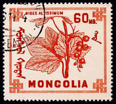 Postage stamp Mongolia 1968 Ribes Altissimum, Deciduous Shrub, F — Stock Photo