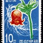 Postage stamp North Korea 1967 Korean Pasque Flower — Stock Photo #19833683