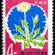 Stock Photo: Postage stamp North Kore1966 Dandelion, Taraxacum Officinale