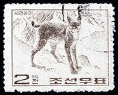 Postage stamp North Korea 1964 Wildcat, Wild Animal — Stock Photo