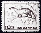 Postage stamp North Korea 1964 Yellow-throated Marten — Stock Photo