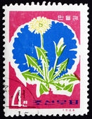 Postage stamp North Korea 1966 Dandelion, Taraxacum Officinale — Stock Photo
