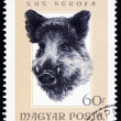 Postage stamp Hungary 1966 Head of Wild Boar — Stock Photo #20068829