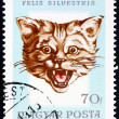 Postage stamp Hungary 1966 Head of Wildcat — Foto Stock