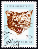 Postage stamp Hungary 1966 Head of Wildcat — Stock Photo