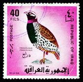 Postage stamp Iraq 1968 Black Francolin, Gamebird — Stock Photo
