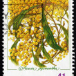 Stock Photo: Postage stamp Australi1990 Golden Wattle, AustraliDay