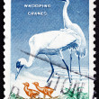 Postage stamp USA 1957 Whooping Crane, Bird — Stock Photo
