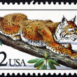 Stock Photo: Postage stamp US1990 Bobcat, Lynx Rufus